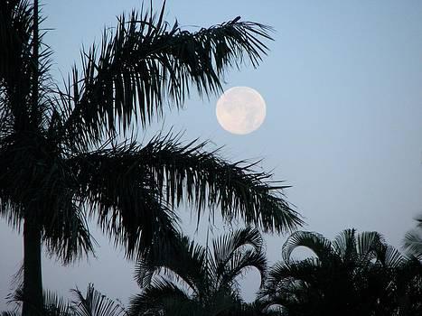 Luna Palms by Bonita Hensley