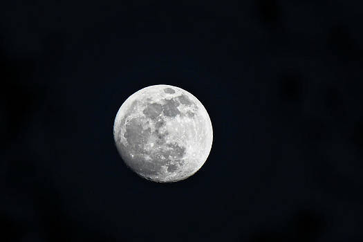 Lunar Craters by Melanie Lankford Photography