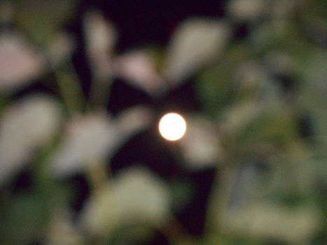 Yuriy Vekshinskiy - Lunar silence