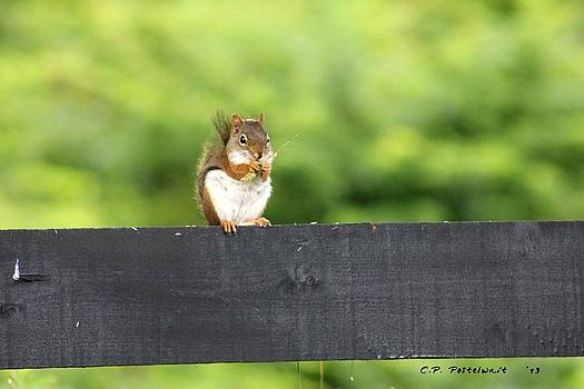 Lunch Break on the Fence by Carolyn Postelwait