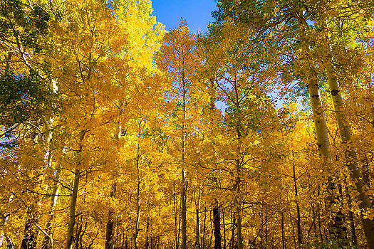 Lundy Canyon East side Fall color aspen by Lisza Anne McKee