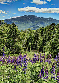 Brenda Giasson - Lupine Mountain