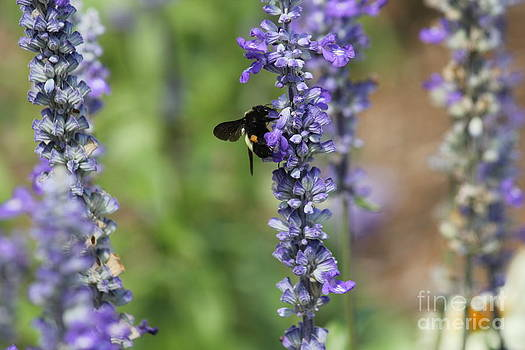 Lupine with Friend by Theresa Willingham