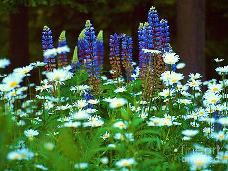 Tammy Bullard - Lupines and Daisies