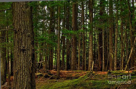 Lush Green Forest by Sam Rosen