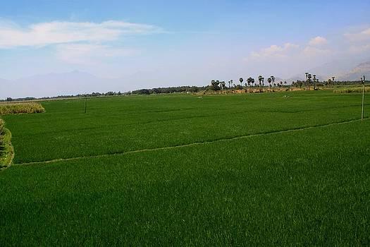Ramabhadran Thirupattur - Lush Green