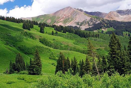 Lush Green of a Colorado Summer by Cascade Colors