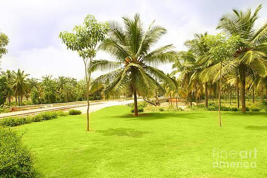 Lush landscape by Sanjay Deva