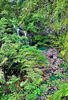 Lush Waterfall by Jane Girardot