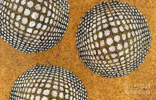 Hailey E Herrera - M U M 2 - Bulge Dots
