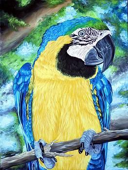 Macaw by Amanda Hukill