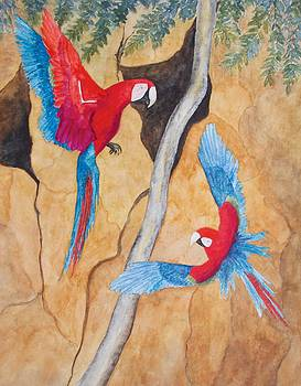 Patricia Beebe - Macaw Claylick