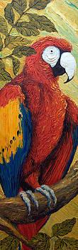 Macaw I by Paris Wyatt Llanso
