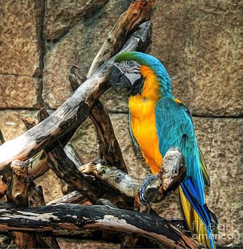 Macaw by Loyda Herrera