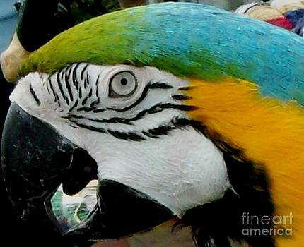 Gail Matthews - Macaw Parrot Portrait