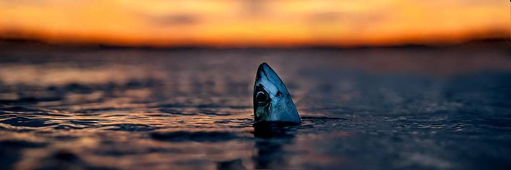 Mackerel Sky by Max Blinkhorn