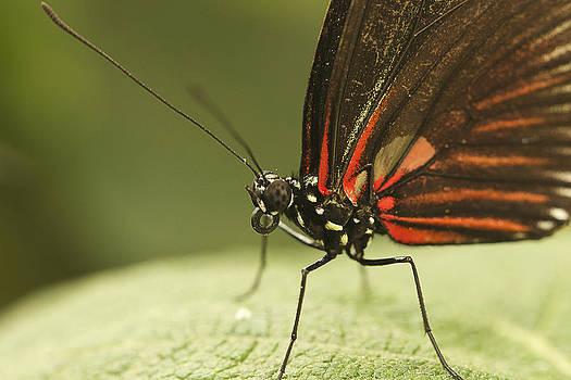 Macro Butterfly by Julie Underwood
