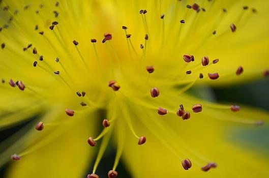 Macro Flower by Riad Belhimer