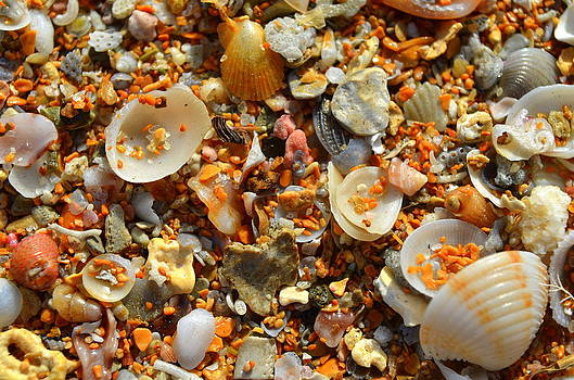 Macro Shells On Sand3 by Riad Belhimer