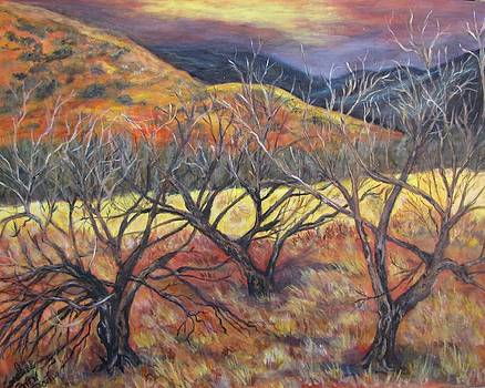 Madera Canyon 2 by Caroline Owen-Doar