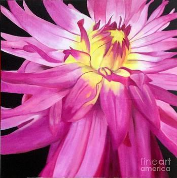 Magenta Beauty by Elaine Callahan