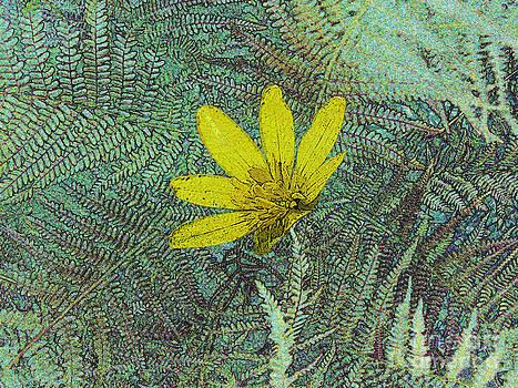 Magic Fern Flower 01 by Ausra Huntington nee Paulauskaite