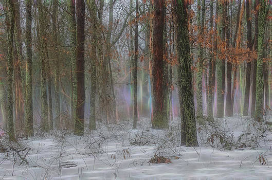 Magic in the Fog 2 by Beth Sawickie