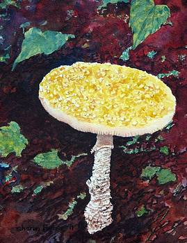 Magic Mushroom by Sharon Farber