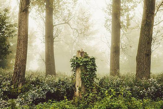 Magic stump by Tomas Hudolin