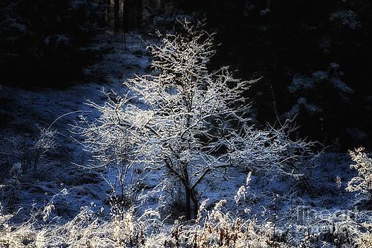 Magic Tree by Monika Wisniewska