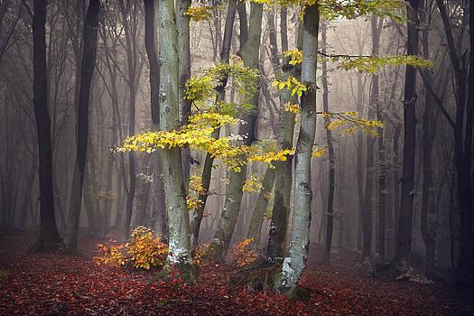 Magic Tree by Toma Bonciu