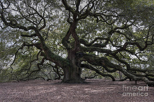 Dale Powell - Magical Angel Oak
