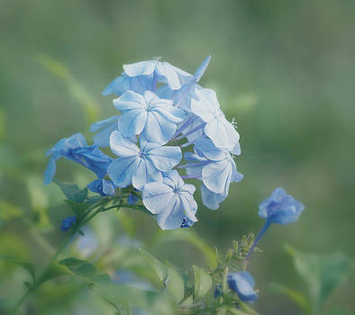 Kim Hojnacki - Magical Blues