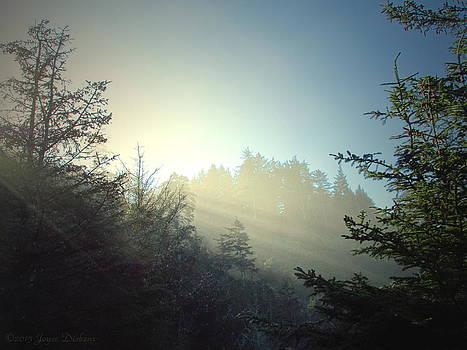 Joyce Dickens - Magnificent Light Three