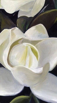 Magnolia Blooms by Matthew Young