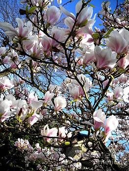 Magnolia Blossom  by Basant Soni