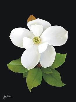 Joe Duket - Magnolia Blossom