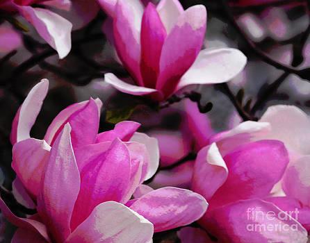 Magnolia Blossoms by Olivia Hardwicke