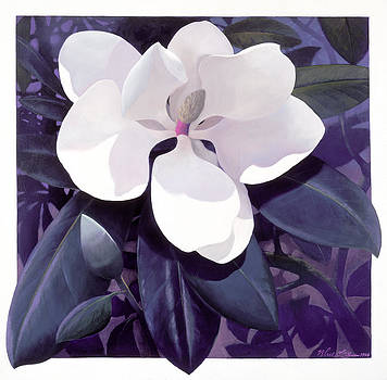 Magnolia by Blue Sky