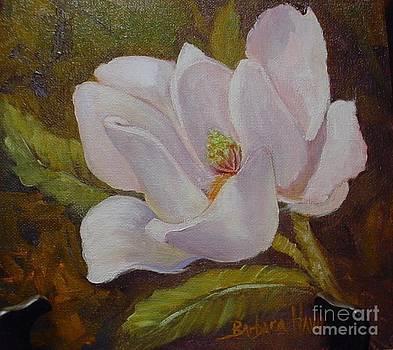 Magnolia by Barbara Haviland by Barbara Haviland