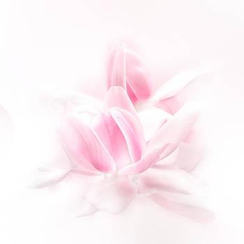 Magnolia campbellii  by Alena Bytcankova