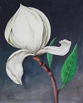 Magnolia by Gertrude Scheffler