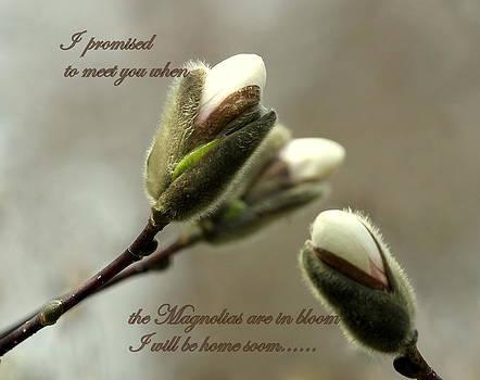 Rosanne Jordan - magnolia Homecoming