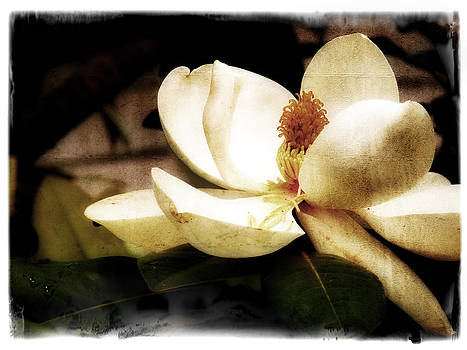 Magnolia III by Tanya Jacobson-Smith