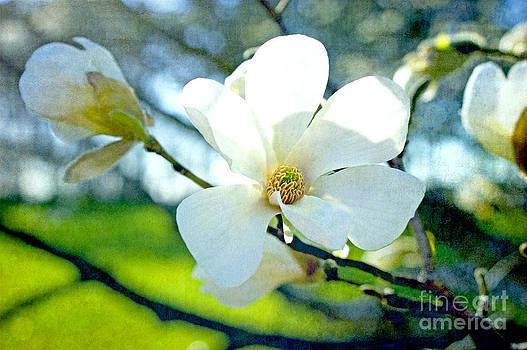 Magnolia Joy by Valerie Fuqua
