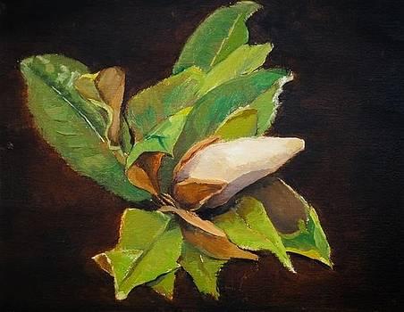 Magnolia by Joyce Snyder