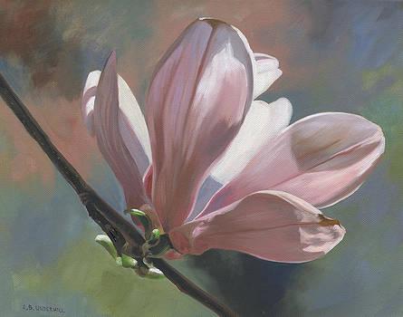 Magnolia Petals by Alecia Underhill
