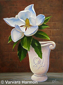 Magnolia by Varvara Harmon