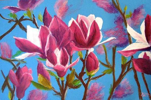 Magnolias by Elena Malec