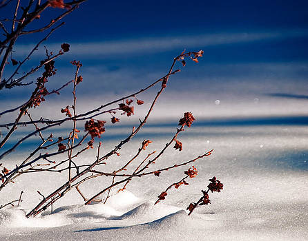 Julie Magers Soulen - Mahogany Bush in Winter Snow